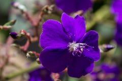 La flor misteriosa imagen de archivo libre de regalías