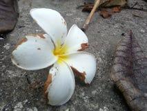 La flor muere Fotos de archivo
