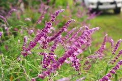 La flor púrpura Imagen de archivo