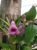 la flor para adorna el jardín Imagen de archivo