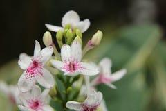 La flor para el amor Fotografía de archivo libre de regalías