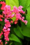 La flor que florece en jardín grande imagen de archivo libre de regalías