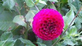La flor que muestra color Fotografía de archivo libre de regalías