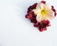 la flor, ramo, rosa, flores, blanco, rojo, naturaleza, aislada, primavera, planta, flor, belleza, floral, pétalo, verde, rosas, s imagen de archivo libre de regalías
