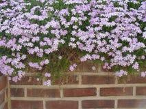 La flor remató la pared Imagen de archivo libre de regalías