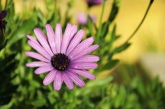 La flor roja del jardín Imagen de archivo libre de regalías