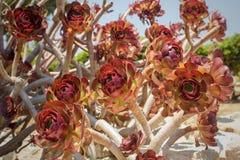 La flor roja floreció Fotografía de archivo