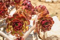 La flor roja floreció Imagenes de archivo