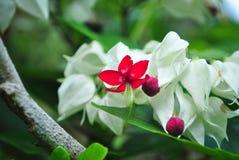 La flor roja solitaria Fotos de archivo libres de regalías