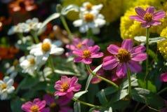 La flor rosada adentro graden mañana Foto de archivo libre de regalías