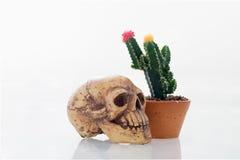 la flor rosada y amarilla del cactus aisló el fondo y el cráneo Imagen de archivo