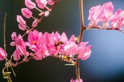 La flor rosada y el fondo verde es hermosos y tiene insecto adentro Fotografía de archivo libre de regalías
