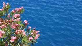La flor rosada y ve