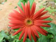 La flor salvaje de la naturaleza Fotos de archivo libres de regalías