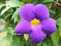 La flor salvaje de la naturaleza fotografía de archivo libre de regalías
