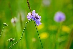 La flor salvaje en el prado Fotografía de archivo libre de regalías