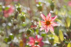 La flor se encogió de miedo en gotas de lluvia brilla brillante como un diamante foto de archivo
