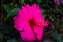 La flor se levantó Imagenes de archivo
