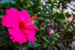 La flor se levantó Foto de archivo