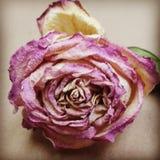 La flor seca Imagen de archivo