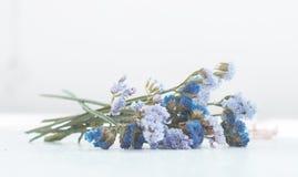 La flor tiene sentido Fotos de archivo libres de regalías