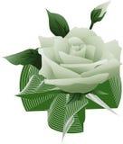 La flor verde se levantó Foto de archivo libre de regalías