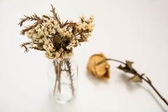 La flor vieja en el tubo de cristal con viejo subió por otra parte Foto de archivo