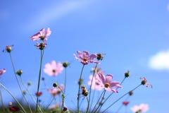 La flor y el cielo azul Fotos de archivo libres de regalías