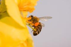 La flor y la abeja Fotos de archivo
