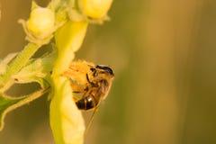 La flor y la abeja Imagen de archivo libre de regalías