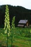 La flor y la cabina Foto de archivo