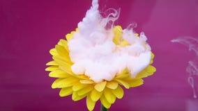 La flor y la tinta blanca se nublan la infusión en el agua en fondo púrpura stock de ilustración