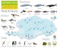 La flora isométrica y la fauna de 3d la Antártida trazan elementos Animales, b