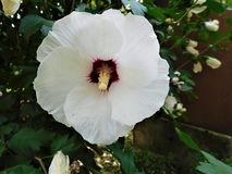 La floración blanca Imágenes de archivo libres de regalías