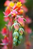 La floración colorea - las plantas de jardín - el arboreto de Willwwood - New Jersey Imagenes de archivo