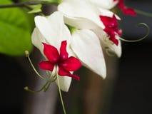 La floración de Bagflower Fotos de archivo