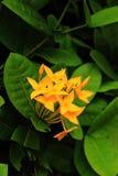 La floración de la flor imagen de archivo libre de regalías