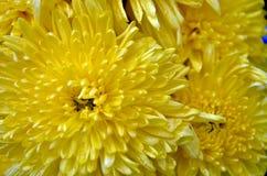 La floración de la flor imagenes de archivo