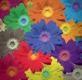 La floración de la flor colorea la tarjeta de felicitación del fondo Fotografía de archivo libre de regalías
