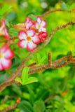La floración de las flores Fotografía de archivo libre de regalías