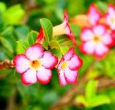 La floración de las flores Imágenes de archivo libres de regalías