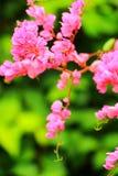 La floración de las flores Foto de archivo