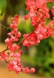 La floración de las flores Fotos de archivo