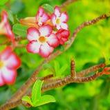 La floración de las flores Imagenes de archivo