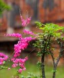 La floración de las flores Imagen de archivo