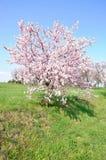 La floración es vernal. Fotos de archivo