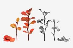 La floraison colorée et sèchent les usines noires et blanches Photo stock