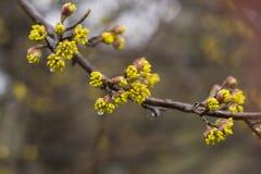 La floraison de l'arbre commence Photographie stock libre de droits