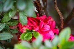 La floraison a monté dans un jardin image libre de droits