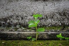 La flore de mauvaise herbe photo stock